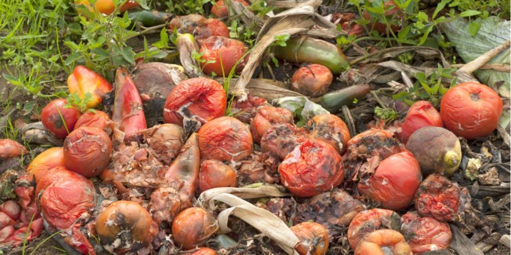 Déchets agricoles comment en tirer profit en Afrique