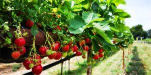 3 idées d'affaires agricoles au rendement rapide
